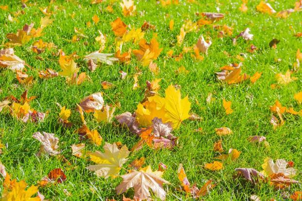 żółte liście na trawie
